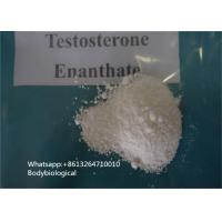 99% Purity Testosterone Enanthate Powder Steroids CAS 315-37-7 Male Sex Hormone