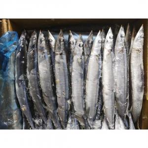 China Top grade New arrival 105g-125g BQF Frozen Pacific Saury Fish with best price wholesale