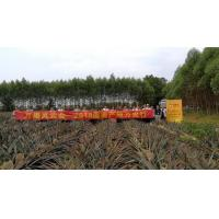 China arrange the fruits delegation to specific fruits plantation for study wholesale