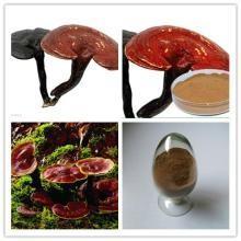 China Reishi Mushroom Extract, Chinese manufacturer supply, Polysaccharides 10%, Shaanxi Yongyuan Bio-Tech wholesale
