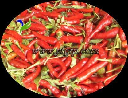 Quality chilli for sale