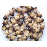 China Pickled Products |Pickled Products>>StrawMushroominbrine wholesale