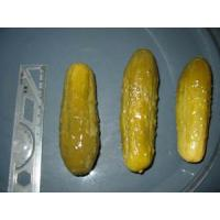 China Pickled Products |Pickled Products>>SaltedGherkin wholesale
