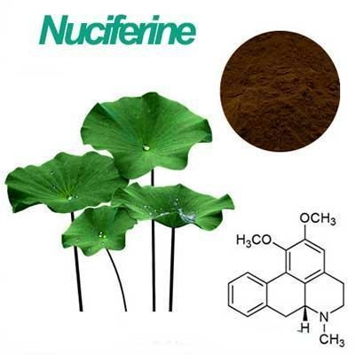 Quality wholesale Lotus Leaf p.e Nuciferine 4% for sale