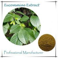 China whosale eucommia ulmoides bark extract Chlorogenic Acid 30% wholesale