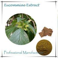 China bulk Eucommia leaf extract 10:1 wholesale