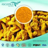 China Turmeric Extract Powder Supplier Wholesale/ Curcumin Supplement on sale