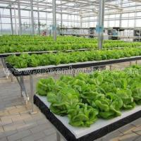 China Greenhouse DFT Hydroponic Cultivation System for Planting wholesale
