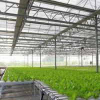 China Greenhouse NFT Hydroponic Growing System for Tomato and Lettuce wholesale