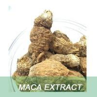 China Enhancement Sexual Ability /Pharmaceutical Raw Material / Maca Extract For Men on sale