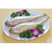 China Yellow croaker wholesale