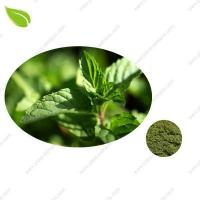 China Mint Seasoning Powder >spices powder wholesale