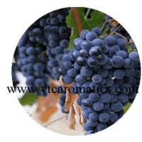 China Grapeseed Essential Oil wholesale