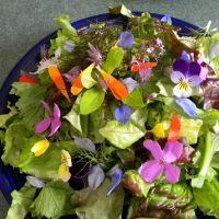 China Sprout Your Own Microgreens, Salad Mixes, and Edible Flower Garnishes! wholesale