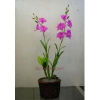 China CLAY FLOWERS Dendrobium Sw- L wholesale