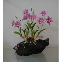 China CLAY FLOWERS ORCHID(Elizabeth L ) wholesale