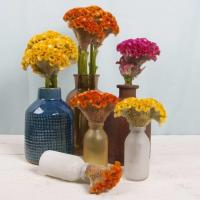 Buy cheap Celosia from wholesalers